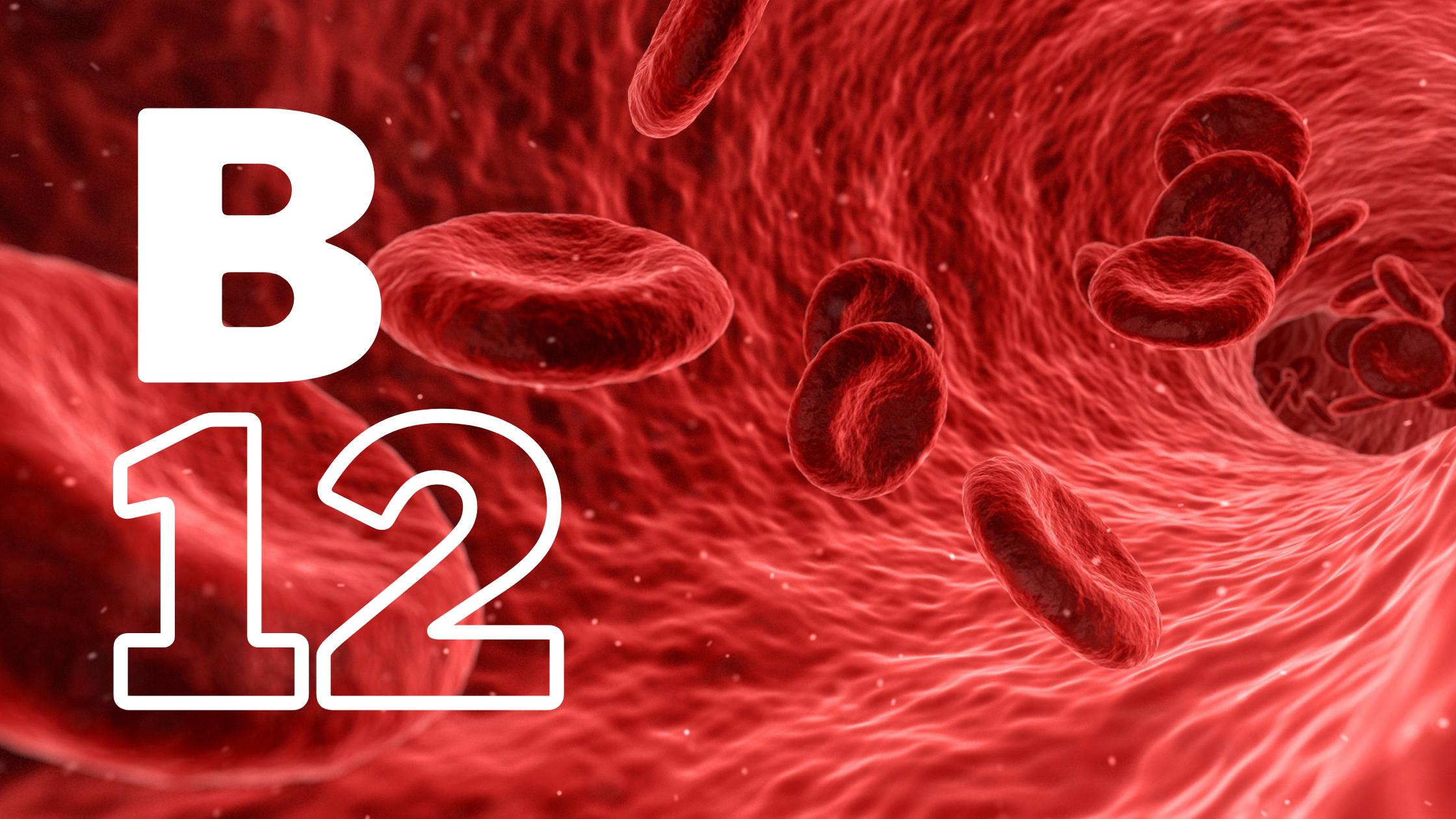 """rode bloedcellen stromen door een ader, met de tekst 'B12"""""""