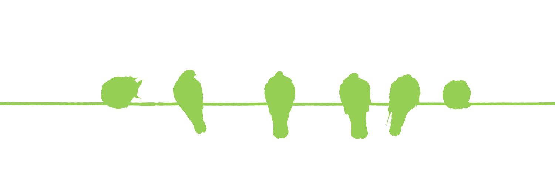 birds sitting in a row